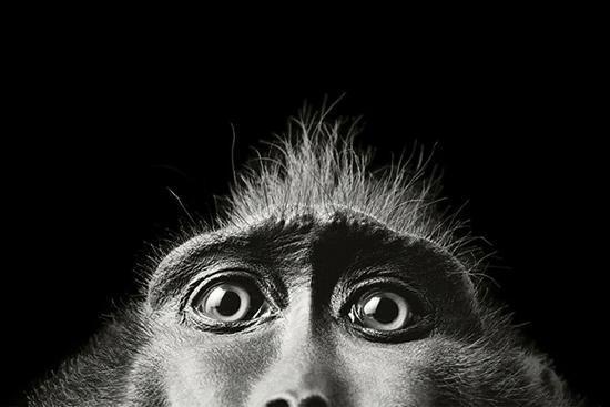 حیوانات در خطر انقراض از لنز دوربین تیم فلچ